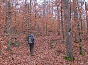 Open birch forest.