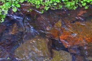 Pipe Creek