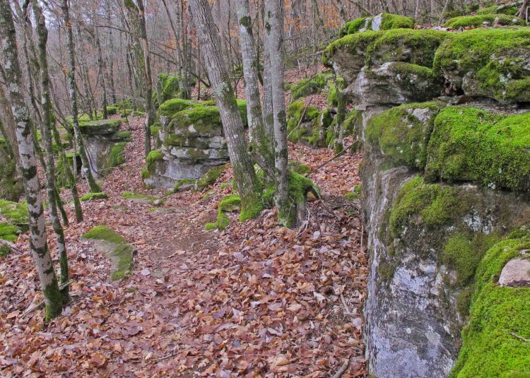 Moss-covered limestone maze similar to many that surround portions of the Buffalo River Trail.
