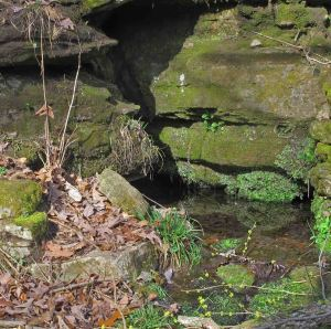 Small clear spring with watercress