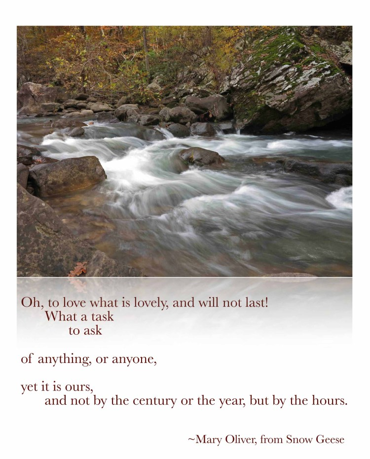 Quote Mary Oliver Snow Geese  copy