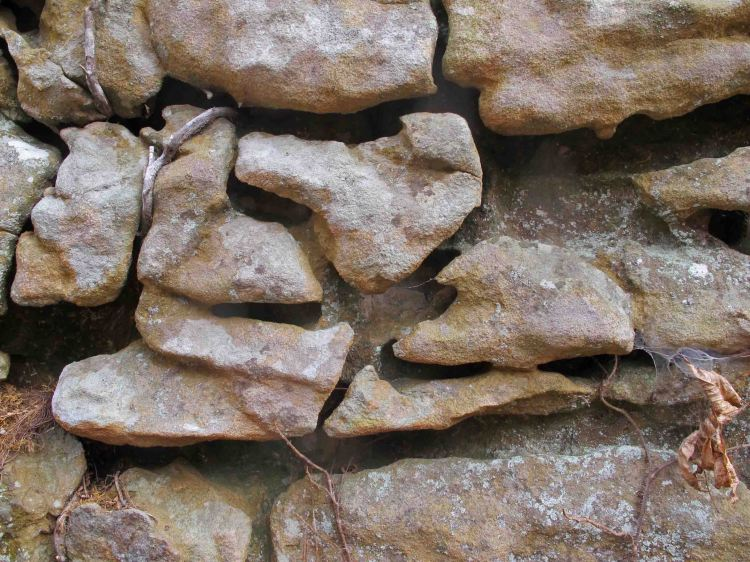 Detail of rock formations in the Hurricane Creek Wilderness Area