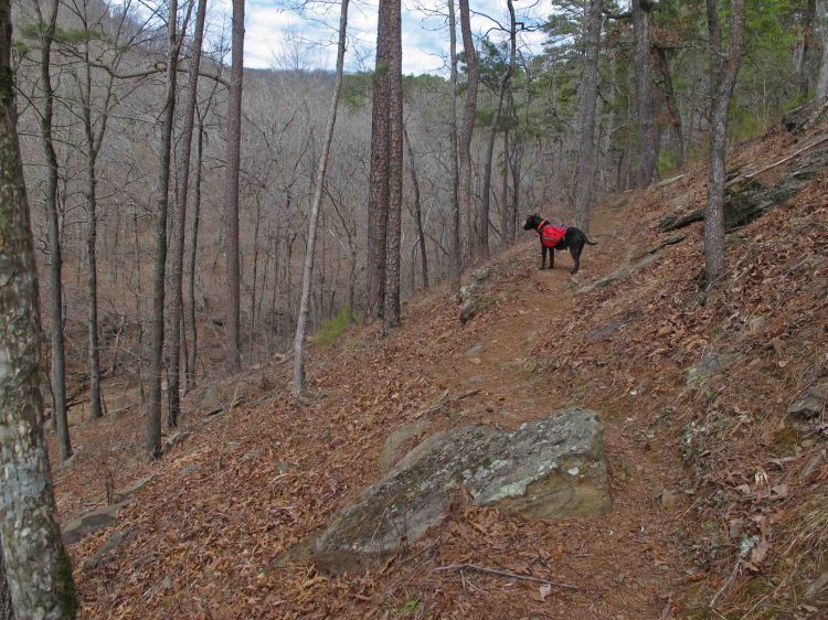 Hiker's March 24-25 trip on the Shores Lake, White Rock Mountain Loop, and Salt Fork Creek.