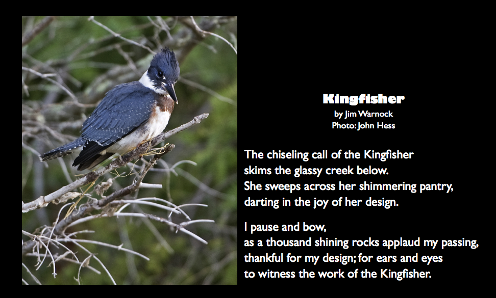 Kingfisher quote post 0717.002