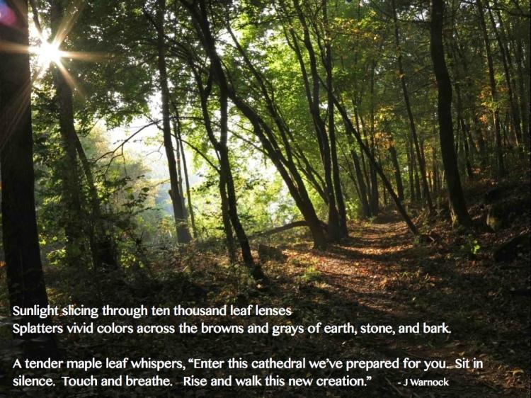 Quote Leaf Lenses.001