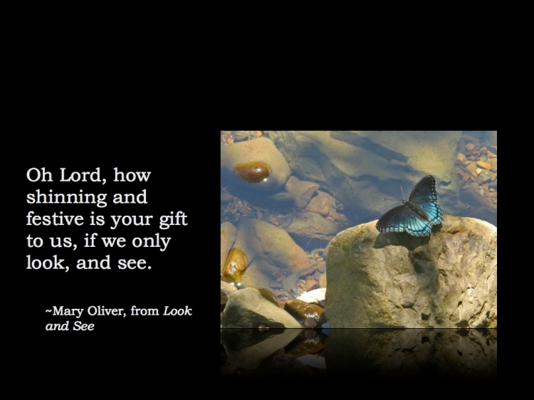 Quote Mary Oliver Look & See.001