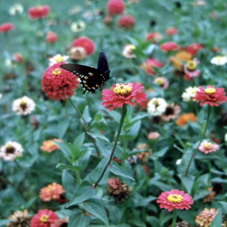 Photo taken by my father on his Zeiss Contessa on a visit to Hodges Gardens.