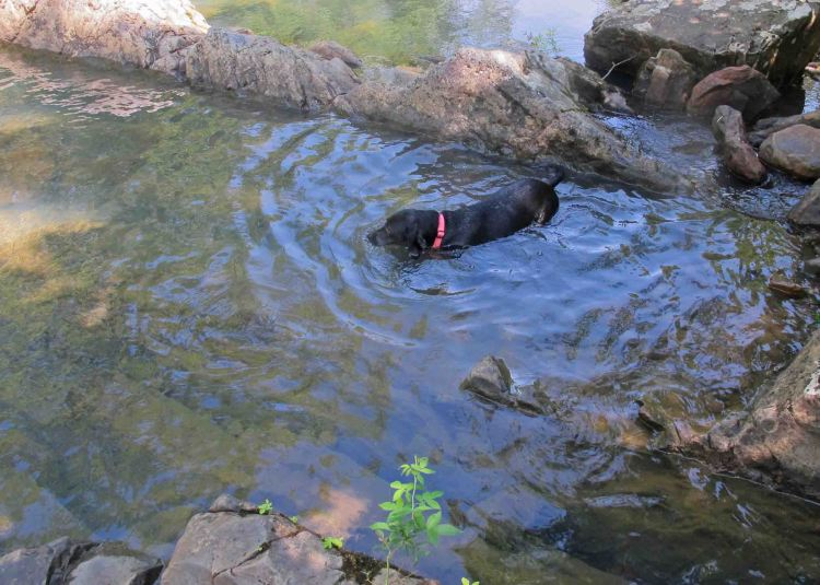 Hiker cooling down in Crystal Prong.