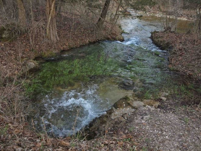 Spring flowing into the creek.