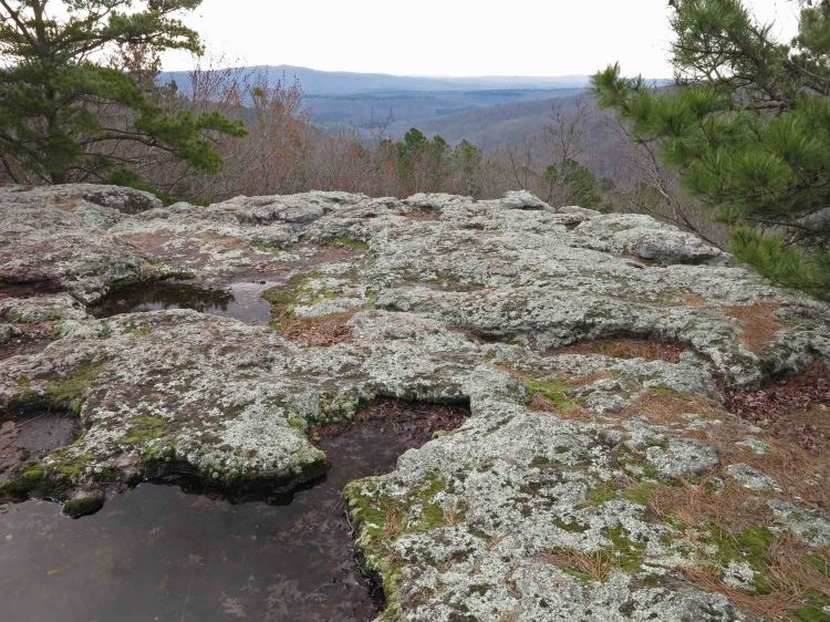 You'll follow bluff lines on the Pedestal Loop Trail and the Kings Bluff Loop Trail.