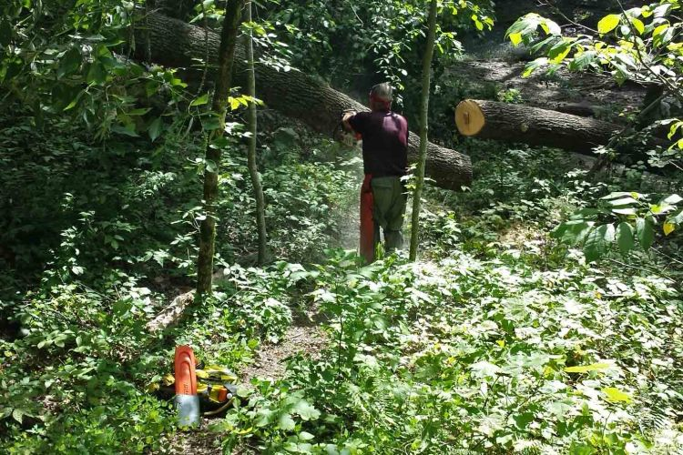 Large oaks toppled head-high across the trail at one creek crossing.