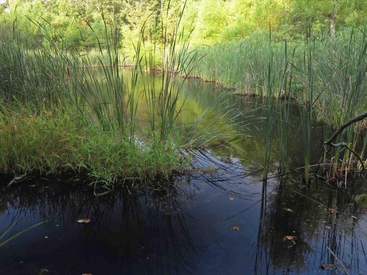 Benefield Pond