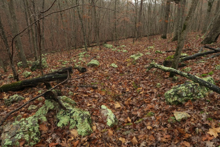Lichen-covered boulders littered the forest floor.