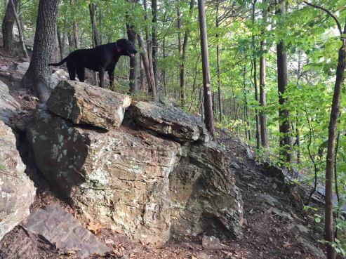 Hiker-dog on a small Lake Alma Trail bluff