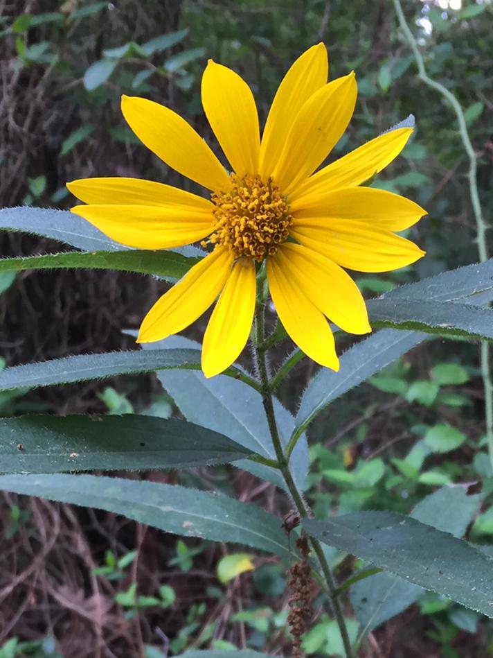 LAT 082617 flower