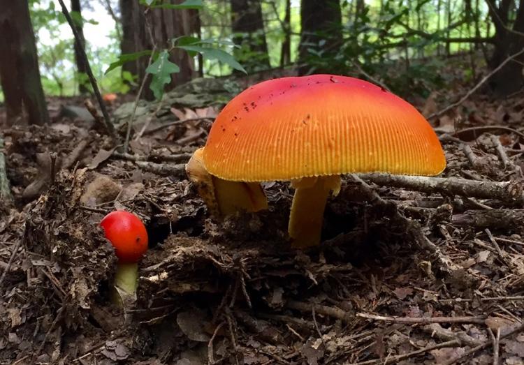 LAT 082617 mushroom