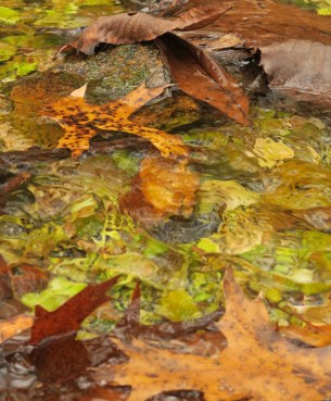 Mint Spring stream