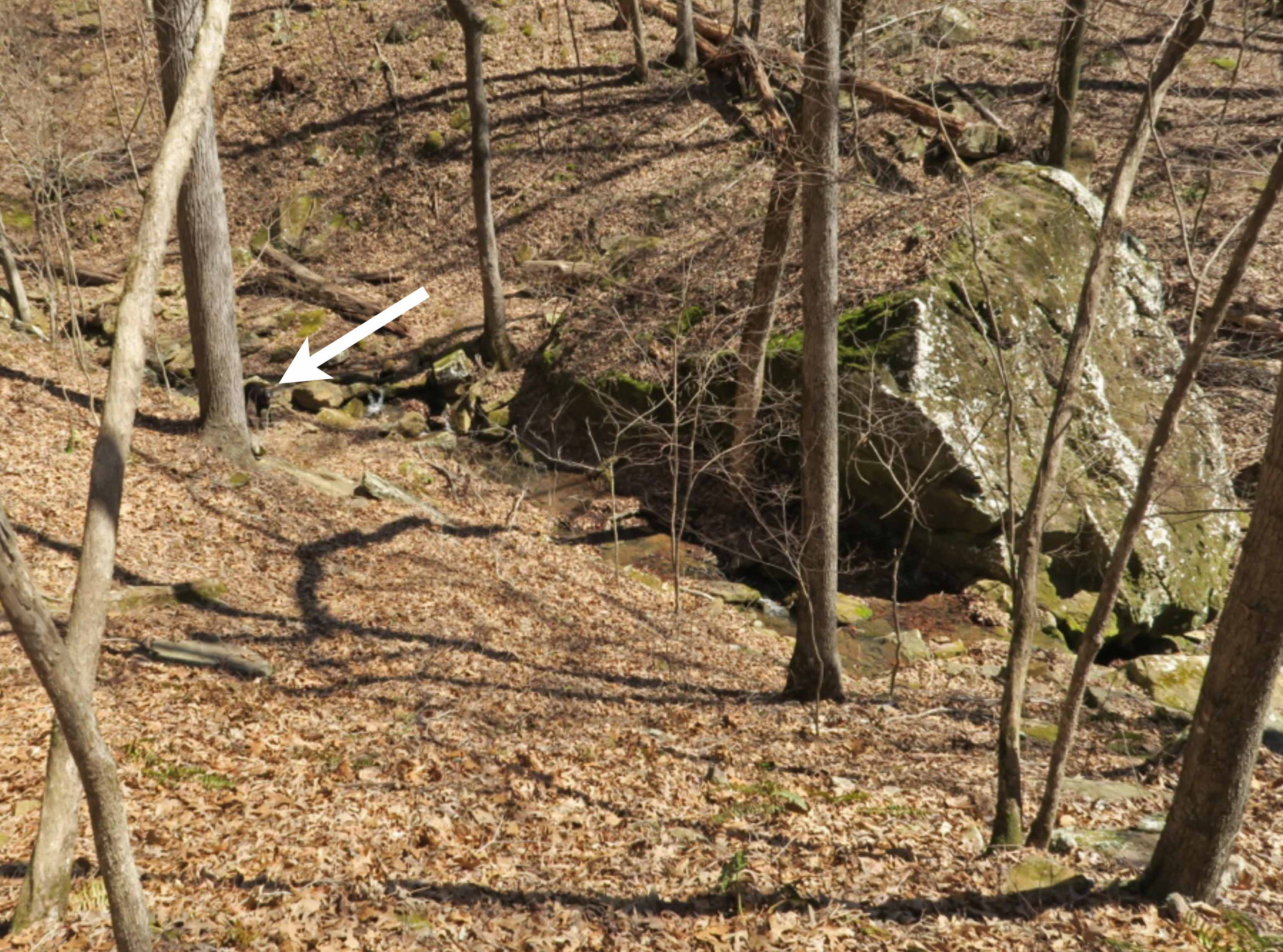 Hiker-dog at creek