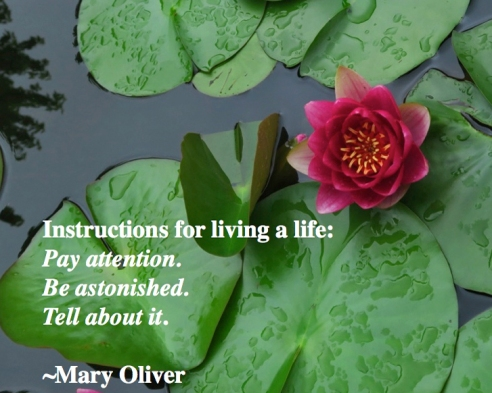 Oliver quote0519.001